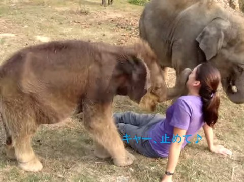 cute-baby-elephant02