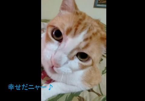 duet-cat02