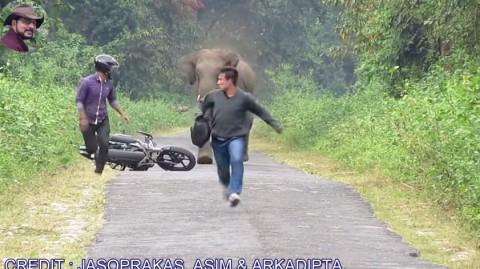 elephent-chasing-bike-rider02