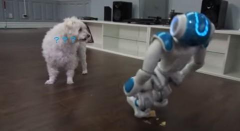 robot-vs-pop-tart02