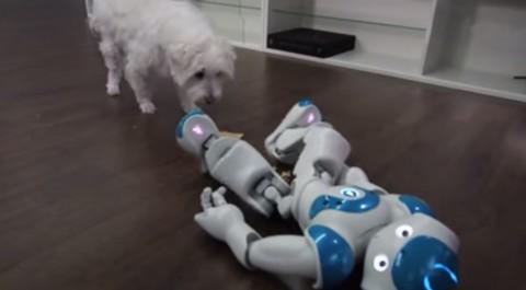 robot-vs-pop-tart03