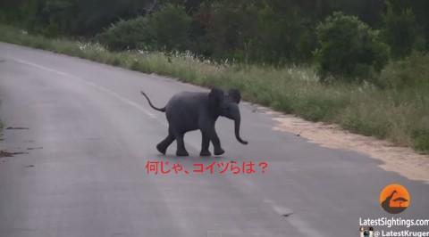 baby-elephant-vs-birds02